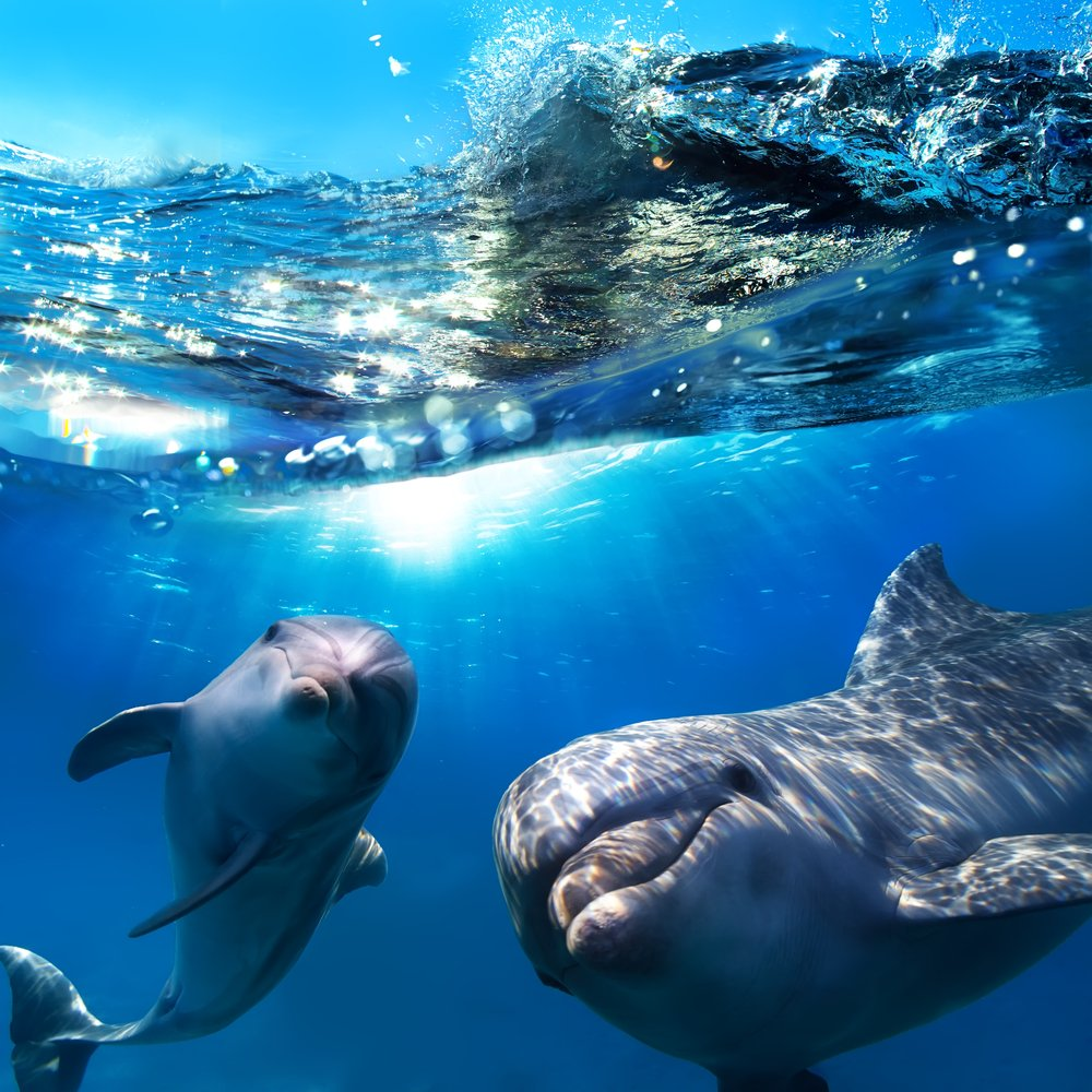 two dolphins are probably laughing at their mate who couldnt do a back flip Schadenfreude!